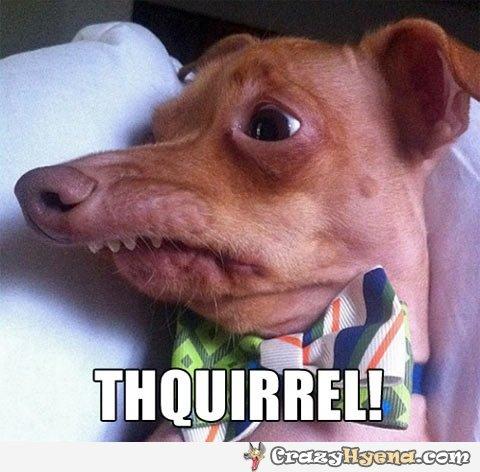 dog-saying-squirrel-funny-pic.jpg