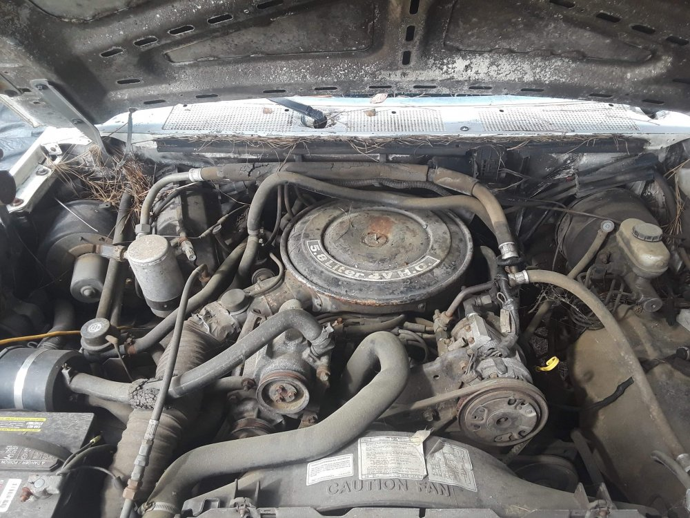 Ford Engine.jpg