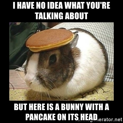 i-have-no-idea-what-youre-talking-about-but-here-is-a-bunny-with-a-pancake-on-its-head.jpg