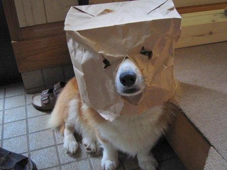 random-dog.jpg