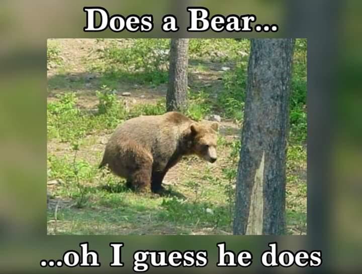 shitting bear.jpg